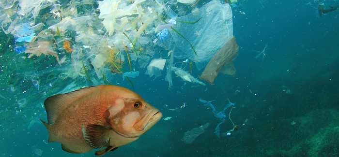 Plastic pollution in oceans has been a high profile topic in recent times