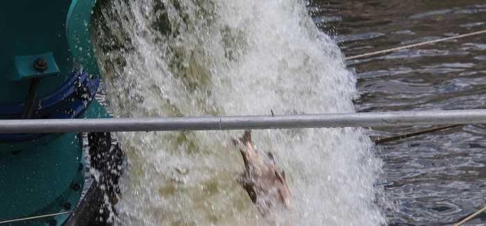 Axial Flow Fish Friendly pump underwent rigorous testing