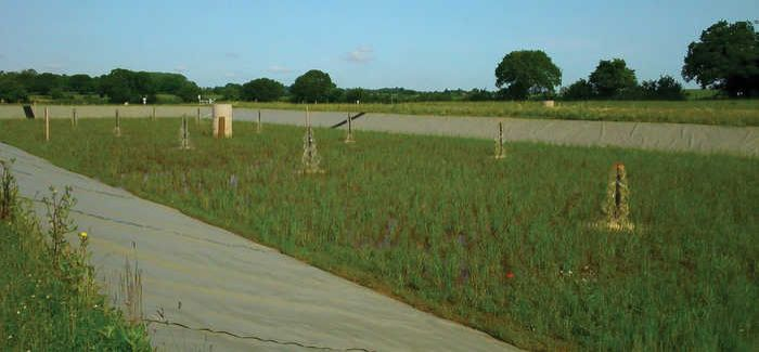 This is the first time reed beds have been used to treat ferric sludge