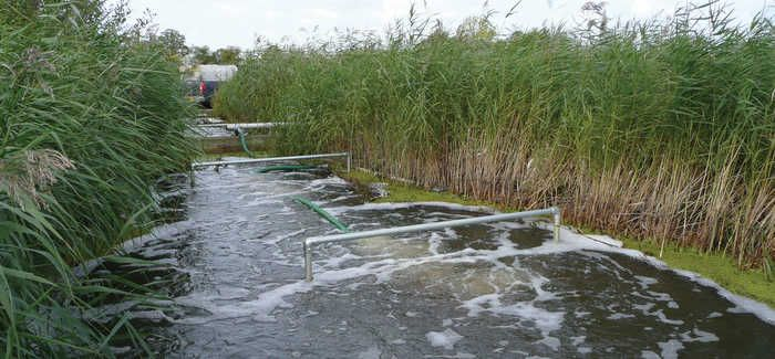 Heathrow Reed Bed Retrofit Sees Dramatic Lift In