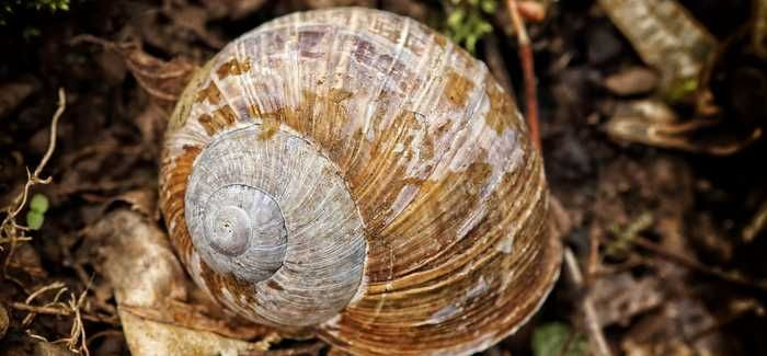 Wastewater treatment plants can be a tempting environment for snails