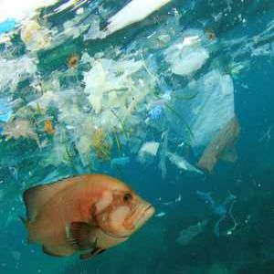 Microplastics: Plastics, plastics everywhere