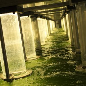 Harnessing the power of algae to reduce phosphorous levels