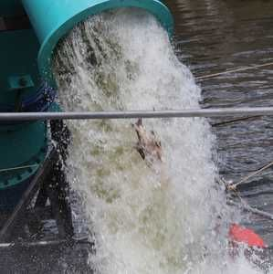 Trials prove pump preserves fish and eels