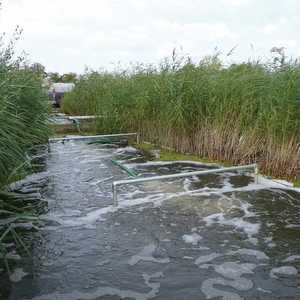 Heathrow reed bed retrofit sees dramatic lift in performance