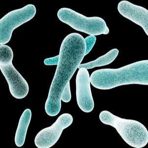 Getting to Grips With...Legionella