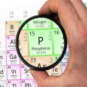 Putting the focus on phosphorus