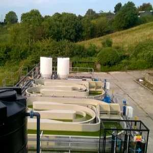 Research Notes: Farming algae to treat wastewater