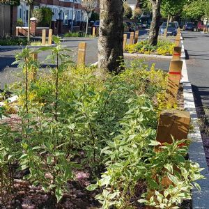 Sustainable success: RainScape and Greener Grangetown