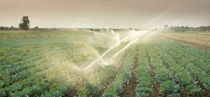 Potential obstacles to the free movement of agricultural products irrigated with reused water could be hampering the potential of water reuse solutions