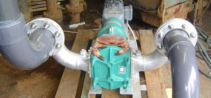 Pumps provide saltwater solution for seafood firm - WWT
