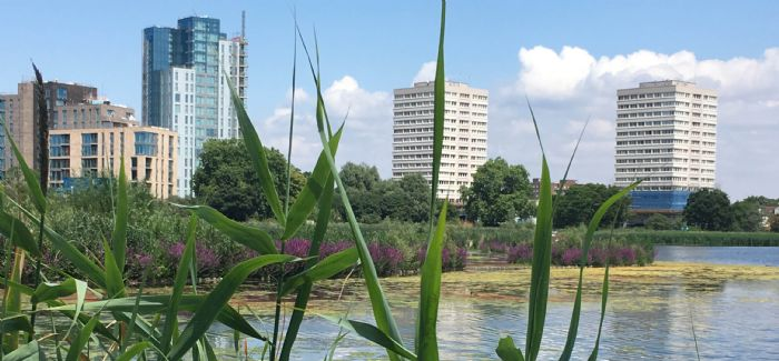 Thames Water and London Wildlife Trust's Woodberry Wetlands site is a haven for wildlife and people in Hackney