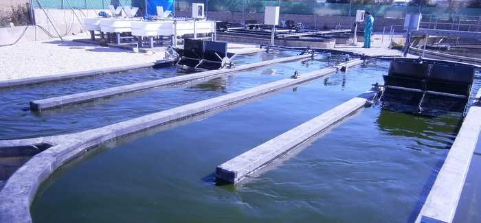 The microalgae also allow the purification of wastewater to a high standard