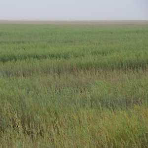 Alcoa enters global wetland treatment market