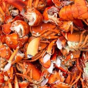 Shellfish waste underpins effluent recovery pilot