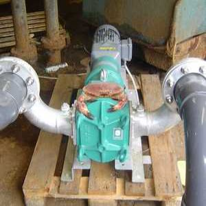 Pumps provide saltwater solution for seafood firm