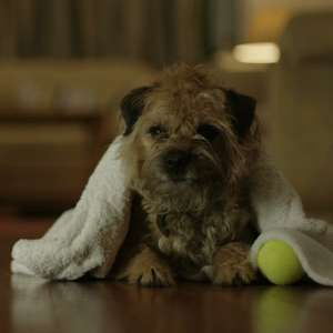 Sprucing up your pooch costs pennies, says Severn Trent Water