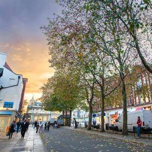 Cranfield studies impact of trees on sewer network