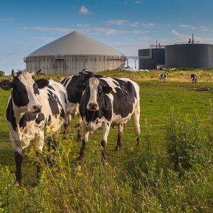 Autoclaving to pre-treat sewage creates more methane
