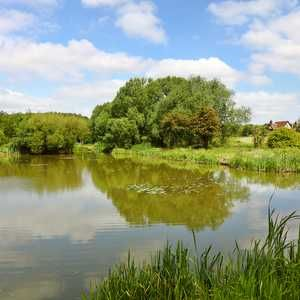 Coca-Cola works with WWF to protect chalk streams