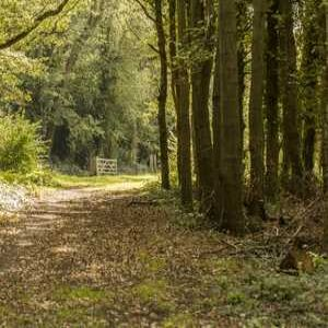 Yorkshire Water to plant 63,000 trees in restored woodland
