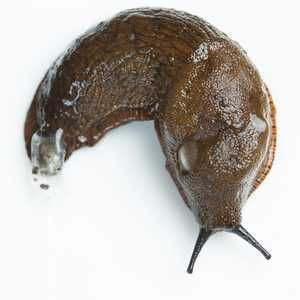 Yorkshire Water urges farmers to use slug pellets wisely