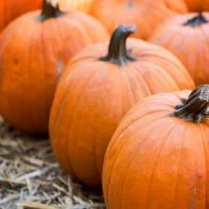 Severn Trent generates clean energy with leftover pumpkins