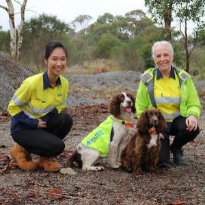 Australian utility uses sniffer dogs to detect water mains leaks