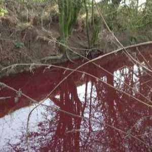 Company fined for blood pollution in stream