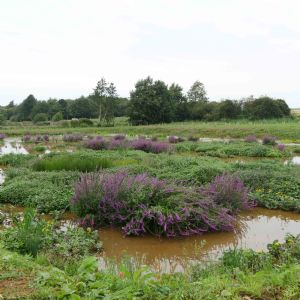 Anglian planning more wetlands after Ingoldisthorpe success