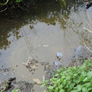 Kent dairy farmer prosecuted for polluting stream with slurry