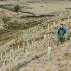 Woodlands for Water scheme offered in Yorkshire and North East