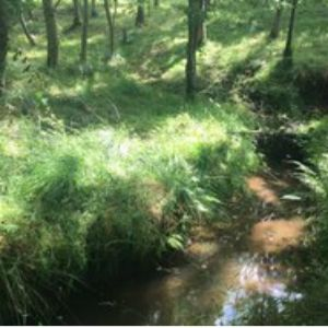 Trees planted in natural flood management pilot