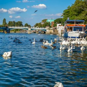 Scientists call for clampdown on antibiotics in the Thames