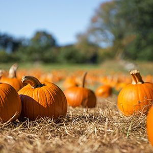 Severn Trent to use pumpkin power