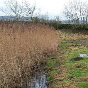 Yorkshire Water scheme to protect reed beds