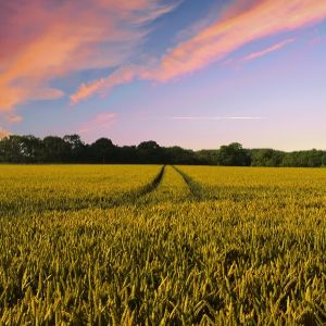 United Utilities to pay Cheshire farmers to grow winter crops