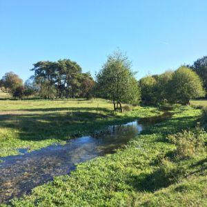 Water companies pledge to protect rare chalk streams