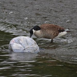 Affinity Water joins forces with SeaBin to fight river plastic pollution