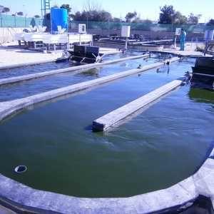 Algae crop success creates clean energy