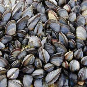 Seashells offer 'significant savings' for wastewater treatment